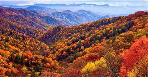 asheville fall colors asheville nc daily visitor information events and news
