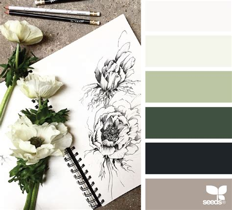 design seeds instagram color sketch design seeds