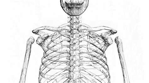 bone anatomy sketches 1000 ideas about skeleton anatomy on