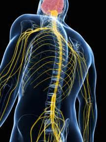 Brain And Spine Spine Anatomy