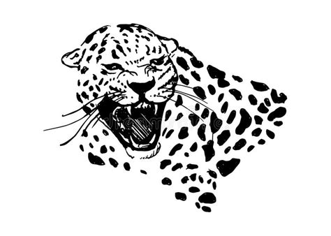 head of roaring jaguar stock vector image 57689469