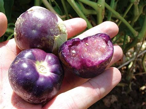tomatillo purple baker creek heirloom seeds