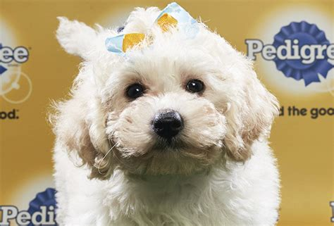 puppy bowl lineup 2018 puppy bowl gallery photos of puppies in animal planet special tvline