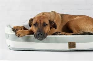 hunde betten orthop 228 disches hundebett sylt