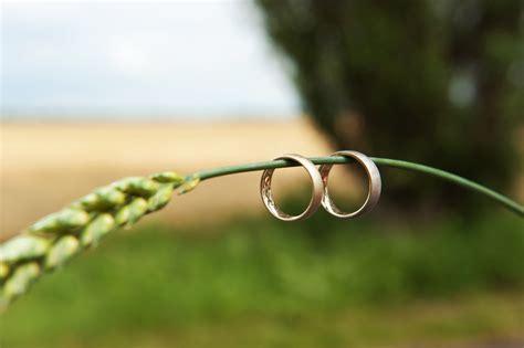 eheringe natur eheringe foto bild pflanzen pilze flechten