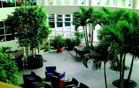Foliage concepts interior plant leasing design amp maintenance in
