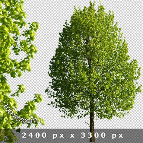 baum architektur cutout trees v01 freigestellte b 228 ume 187 tonytextures de