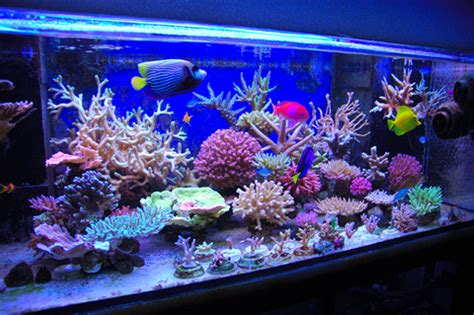 design aquarium air laut akuarium ikan air laut asas akuarium air laut
