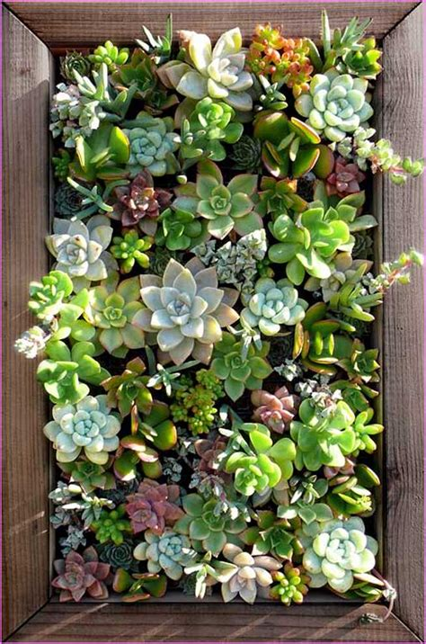 living wall planters living wall planter succulents home design ideas