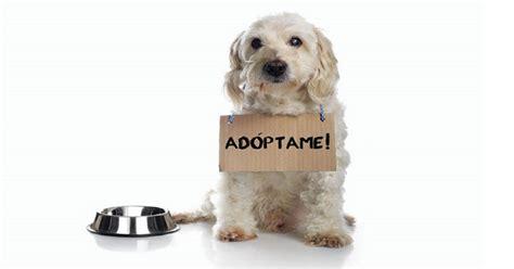 imagenes abstractas de un perro porque adoptar un perro como facilitar la adopcion dogalize
