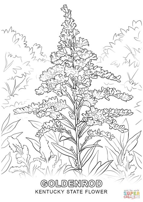 kentucky coloring book pages kentucky state flower coloring page free printable