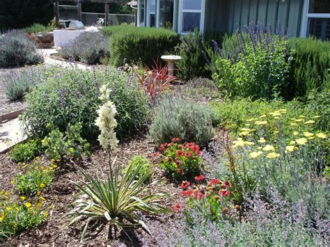 drought tolerant landscape design of herbs home ideas collection