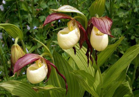 imagenes de paisajes que forman caras 191 son estas las flores m 225 s ex 243 ticas del mundo