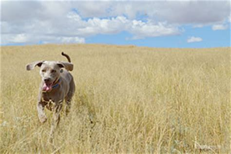 7 Health Conditions That Hit Dogs by 5 Diseases Vets Don T Think You But Should Page 7