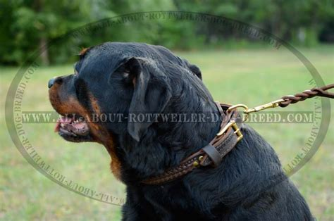 awesome collars order braided leather rottweiler walking collar