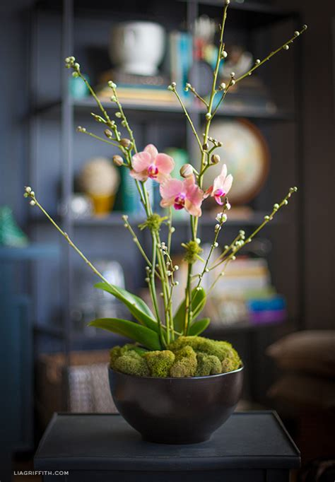 how to decorate a garden orchid flowers how to style an orchid plant lia griffith