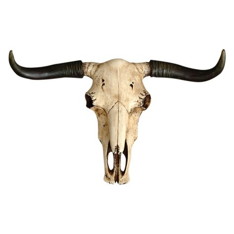 steer skull wall hanging