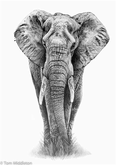 elephant tattoo drawing elephant pinteres