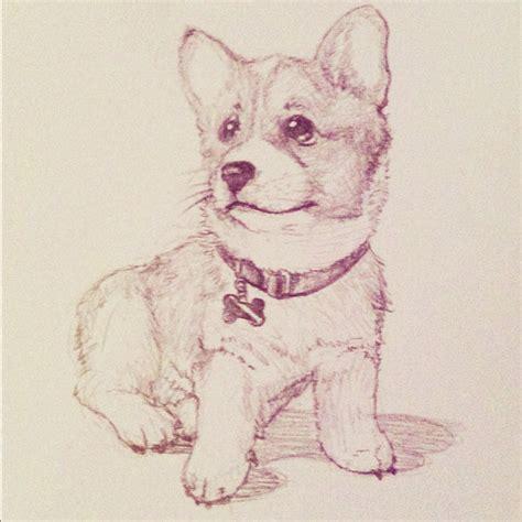 puppy sketches khuon nguyen corgi puppy sketch corgi sketches and drawings