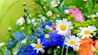Best Florist Near Me by Flowers Near Me Wallpaper