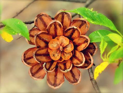 how to make pine cone flowers flower power pinterest 14 kids crafts to make with pine cones tip junkie