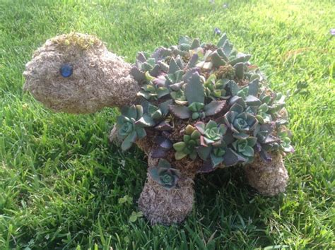succulent turtle 17 best images about topiary on pinterest the universe
