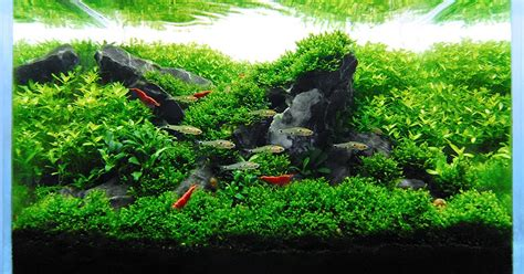 Aquascape Reviews by Nano Aquascape Quot Rock Garden Quot Bolbi Aquarium