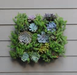 wall planter living wall planters pamela crawford living wall planter w liner