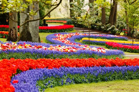 flower garden netherlands springe guide tulips in the netherlands tours4fun