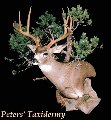 Deer Pedestal 20 Creative Mule Deer Mounts Gohunt
