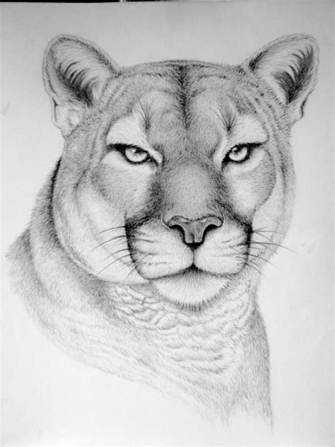 Wild Animal Drawings On Behance Animal Pictures For To Draw