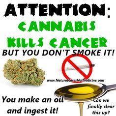 best hemp for cancer 1000 images about cannabis cancer cure on