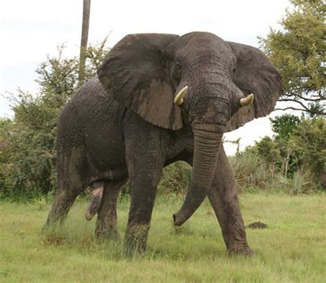 imagenes animales terrestres los animales terrestres informacion sobre animales