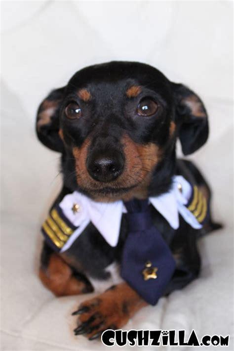 pilot dogs cushzilla captain pilot for cats and dogs x small