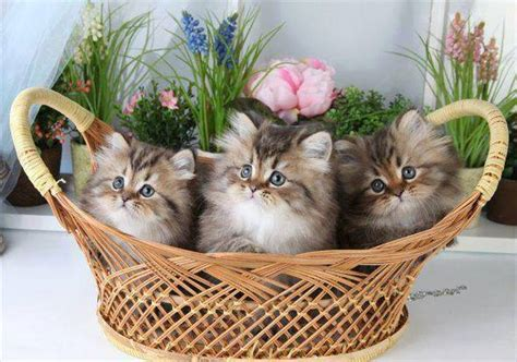 imagenes de jardines con gatos im 225 genes de gatitos con flores bloggergifs