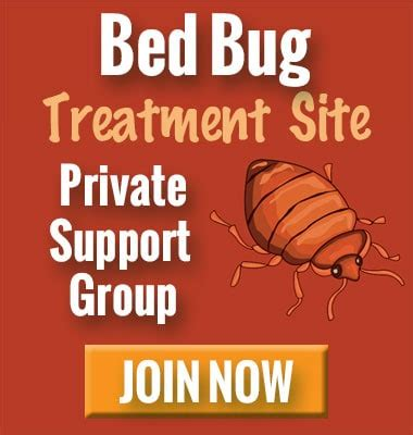 find bed bugs   home