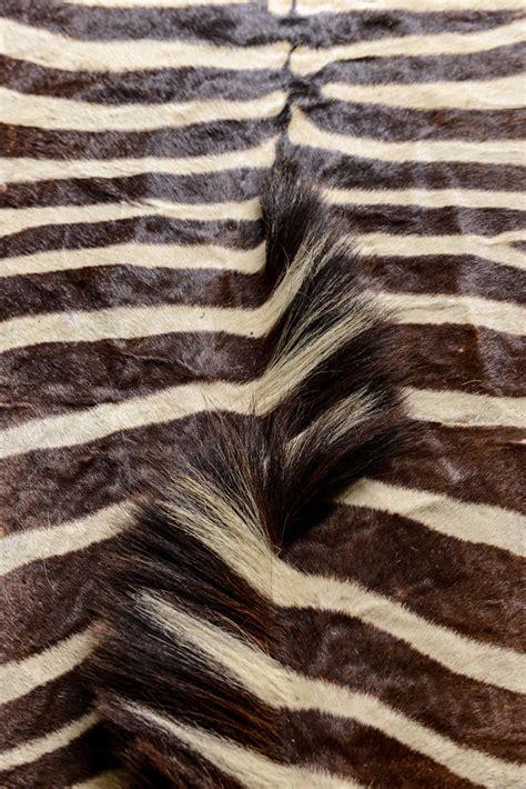 rug zebra zebra rug at 1stdibs