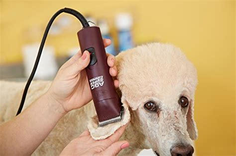 best grooming best clippers for poodles poodle clippers for grooming