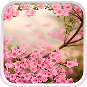 google images flower spring flowers live wallpaper android apps on google play
