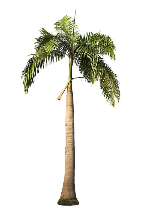 pictures of different types of palm trees slideshow
