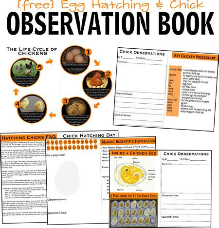 free hatching baby chicken egg observation book to help