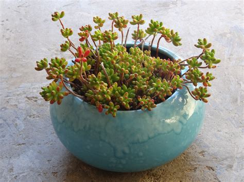 Succulent Pots For Sale by Succulent Container Gardening Tended