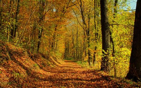 imagenes hd bosques bosque en primavera hd fondoswiki com