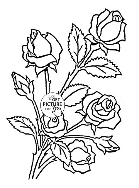coloring pictures of roses and flowers roses coloring page for flower coloring pages