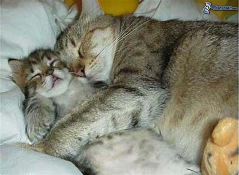abbraccio a letto gatta e gattino