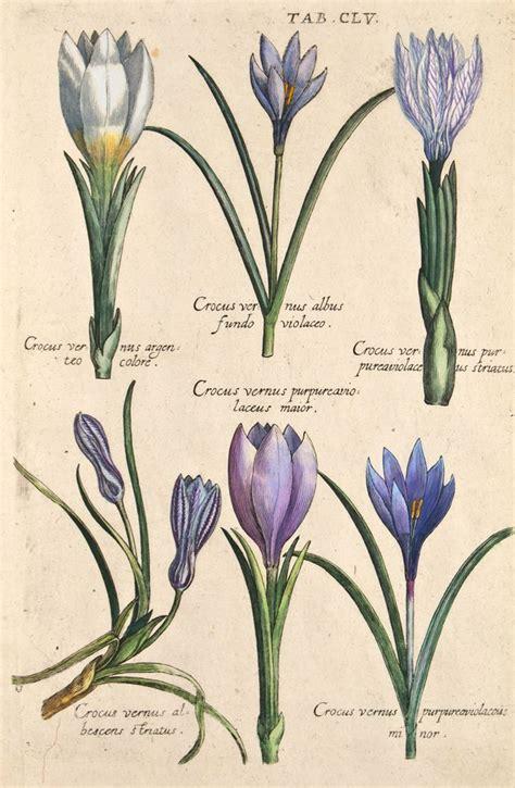 valentini imagenes medicas mejores 515 im 225 genes de tavole botaniche en pinterest