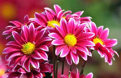 sui fiori sai tutto sui fiori quiz ecoo