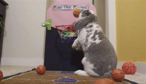 Bunny Record Bini The Basketball Bunny Achieves World Record Neatorama