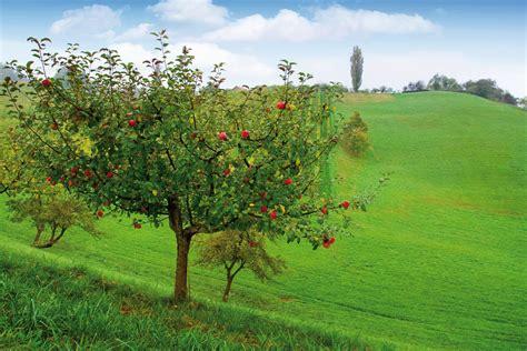 Apfelbaum Pflanzen Jahreszeit 4320 apfelbaum pflanzen jahreszeit apfelbaum pflanzen darauf