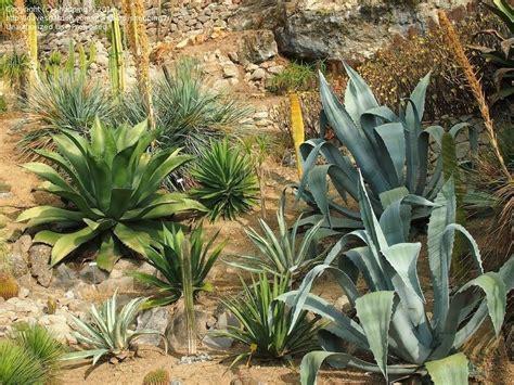 tropical foliage plants identification plant identification closed tropical plants from the